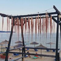 Octopus drying in the sun