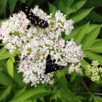Insects, flowers